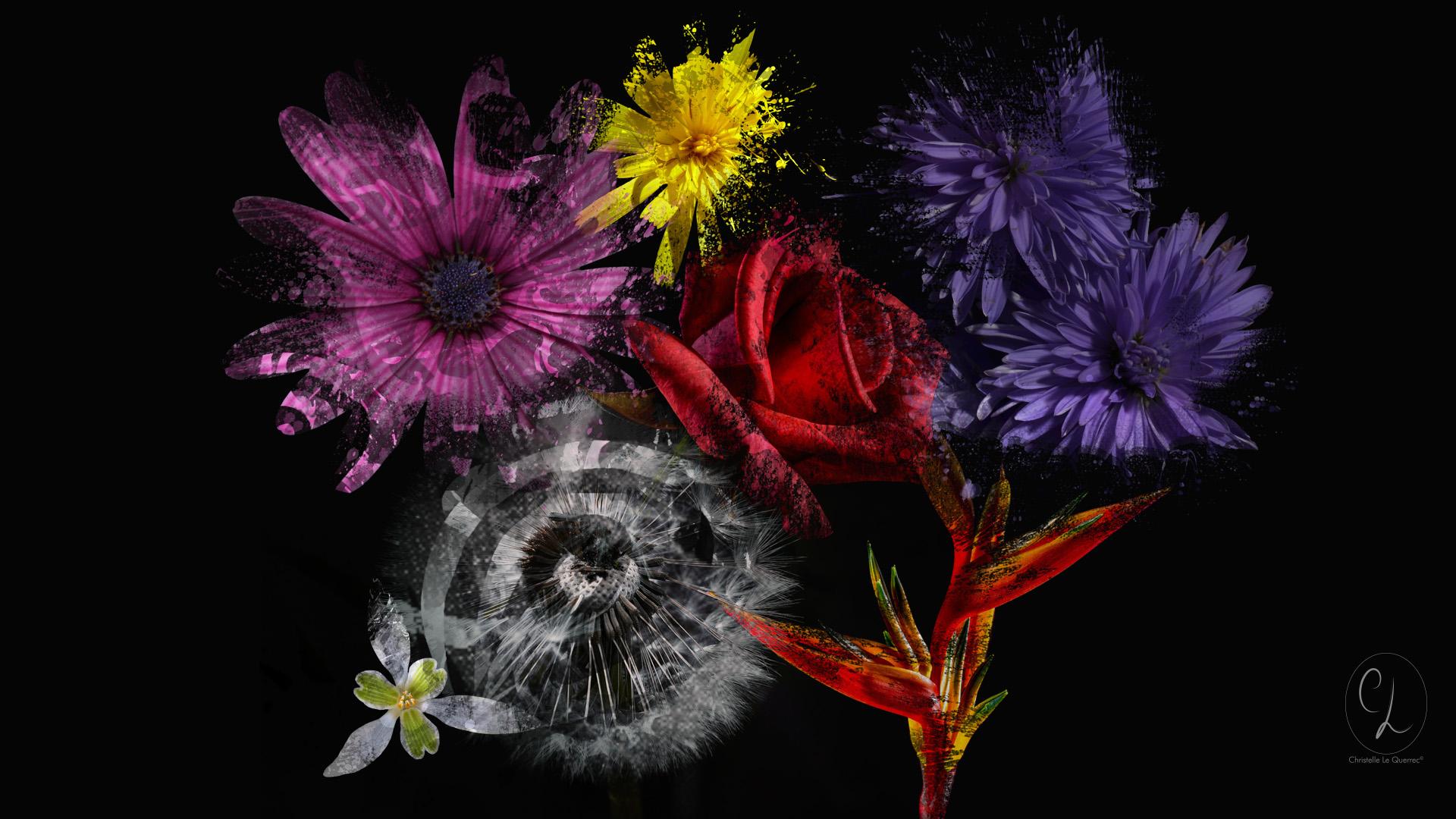 Fond d'écran Explosion de fleur 1920 x 1080 px